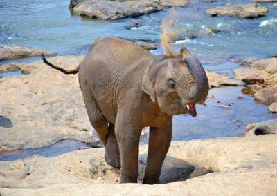 baby-elephant-267124_960_720